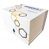 Human Asprosin ELISA Kit
